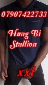 XXL Hung Bi Stallion - escort in Glasgow City Centre